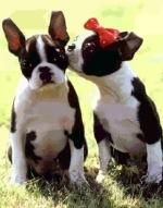 Kissdogs